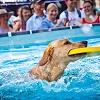 Hunde-Weitsprung in Wels