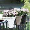 Blumen auf dem Geländer