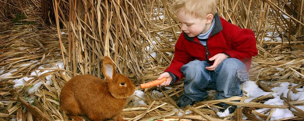 Bräuche zu Ostern